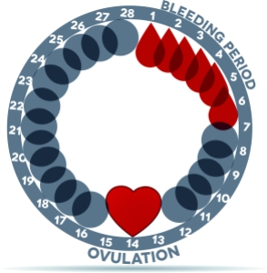 Menstrual cycle graphic. Avarage menstrual cycle days. Bleeding period and ovulation. Beautiful abstract design. Bleeding days- drop symbol; ovulation- heart.